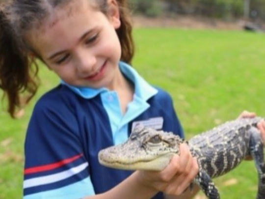 Following Government advice on 24 September 2020, the Australian Reptile Park is thrilled to announce that we are recommencing on-site school excursions! Excursions will proceed while staff and visitors are adhering to our COVID-safe plan.  Guidelines of COVID-Safe Excursions at the Australian Reptile Park will be supplied to teachers during the booking process.  If you have any questions regarding school excursions, please call Reception on (02) 4340 1022 or email admin@reptilepark.com.au  --  Mix education with fun at the Australian Reptile Park! Our shows are designed for years K-6 and an excursion to the Reptile Park is truly a hands-on experience.