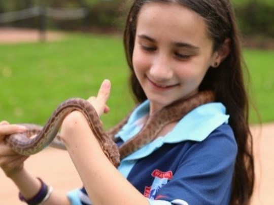 The Australian Reptile Park, can come to your school with our interactive, fun and hands-on program to give your students a better understanding and appreciation of the diversity and importance of the world's creatures and the vital role they play in the well being of the planet